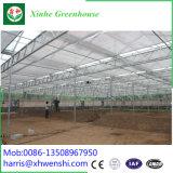 Estufa tropical conetada tratada UV de Venlo Polytunnel calha de vidro