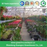 Serre chaude de film plastique pour horticulture