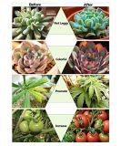 Lo spettro completo 60W LED di AC85-265V si sviluppa chiaro per le piante