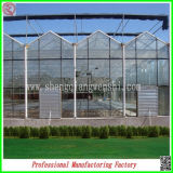 PC Sheet Greenhouse di Venlo con Factory Supplier per Agriculture