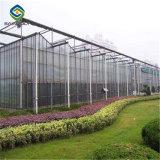 Preiswertes Preis-Glasdeckel-landwirtschaftliches Gewächshaus für Tomaten
