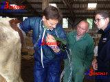 Test de grossesse bovine Veteirnay Appareil à ultrasons, les bovins de boucherie, les bovins laitiers, Bull vache avec batterie d'échographie, ordinateur de poche portable équine de l'échographie,