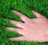 مرج اصطناعيّة مع عال [أو/ف] مقاومة لأنّ زخرفة, حديقة, يرتّب