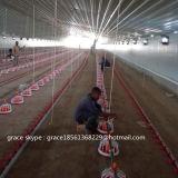 Fabrik-Geflügelfarm-Maschinerie mit freier Entwurfs-Stahlgeflügel-Halle