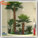 Evergreen fibra de vidrio artificial palmera para la decoración