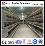 Le Qatar ferme de poulet de la volaille de la couche d'équipement pour la vente