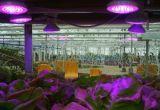 Новый творческий свет сада СИД с алюминиевым основанием