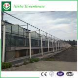 De commerciële Gegalvaniseerde Serre van het Glas van de Tuin van het Frame van het Staal voor Tomaat