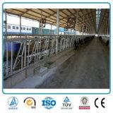 Экономичные скотины коровы стальной структуры полуфабрикат полиняли для фермы поголовья