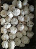 чеснок 6.0-6.5cm свежий новый белый
