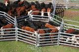 オーストラリアのための6頭の棒牛ヤードのパネル