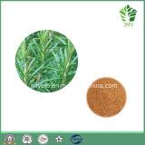 Estratto caldo della Rosemary di vendita, acido 60%, acido 98% di Carnosic di Rosmarinic