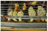 La cage de batterie de poulette pour la ferme avicole à vendre met en cage le système (type le bâti de H)