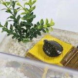 Transporteur en plastique d'animal familier de cuvette de tortue de poissons de produit d'Acquarium