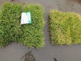 米の植わることのUnigrowの微生物有機肥料