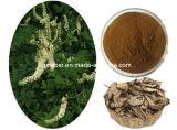 Extrait noir normal pur anti-vieillissement de cohosh du triterpène 2.5%-8% (Ting)