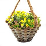 Panier s'arrêtant de fleur de copeaux pour le jardinage