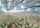 Grilleur et système potable de buveur de poulet de couche