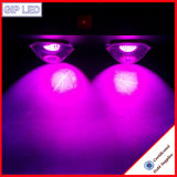 Shenzhen preiswerte LED wachsen Lichter, 300W, das PFEILER LED Licht wachsen