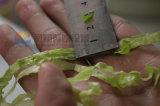 Machine à découper à la carotte congelée / fraise 2016, Machine à couper le chou, Chopper aux légumes (FC-305B)