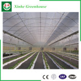 Serre chaude de feuille de PC de polycarbonate de prix usine pour le légume