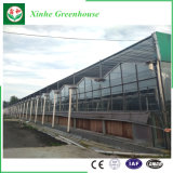 Heißes Verkauf Muti Überspannungs-Gewächshaus-Glasgewächshaus für Werbung