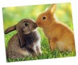 Foto impresa en paneles de aluminio de la foto para Cute Animals