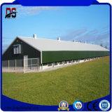 Materiali da costruzione preverniciati di colore di disegno del pannello a sandwich per l'azienda agricola di pollo
