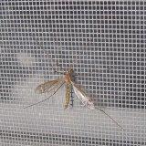 Janela de fibra de vidro revestidos de PVC Netting Mosquito tela plástica