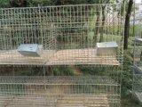 Высокое качество заяц отсек для ферм