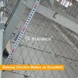 Tianruiの養鶏場のための自動卵の鶏の層のケージ