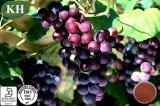 Высокое качество винограда экстракт Proanthocyanidins