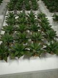 Plantes et fleurs artificielles de la centrale succulente Gu-SD0377