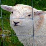 Bauernhof-Zaun Glassland Saperation Zaun-/Scharnier-Verbindungs-Zaun/reparierte Knoten-Rotwild-Zaun