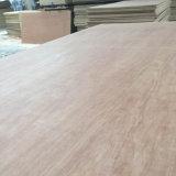 madera contrachapada de 12*1220*2440m m Bintangor para los muebles