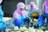 Neue abgezogene Zwiebel des Getreide-2017 purpurrote Qualität