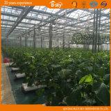 De hoge Serre van het Glas van de Opbrengst voor het Planten van Komkommer/Tomaten