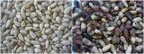 Machine de traitement alimentaire RVB Vsee Grain noix de pin trieur de couleur