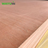 [تريبلي] [3-لر] [3مّ] [أكووم] قشرة تجاريّة خشب رقائقيّ حوض لب