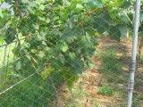 Réseau d'Anti-Oiseau de compensation de HDPE