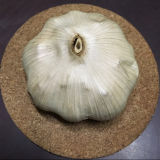 [فدا] عضويّة طبيعيّة يتخمّر ثوم أسود مع بلاستيكيّة مرطبان تعليب