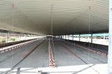 自動鉄骨フレームの肉焼き器の養鶏場の家