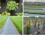 Chinesisches Fabrik-Preis-Gartenweed-Steuergewebe mit Qualität