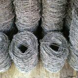 電流を通された装飾的な有刺鉄線