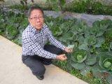 Unigrow Schmutz-Düngemittel auf irgendeinem Gemüsepflanzen
