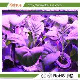 Coffre-fort de culture hydroponique de plantes qui poussent le bac en plastique