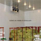 Entreposage au froid, chambre froide, surgélateur pour des fruits et légumes