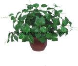 Venda planta artificial Pothos quente