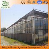 Serre van het Glas van de Landbouw van het Type van Venlo Hydroponic voor Groenten/Bloemen/Tomaat/Landbouwbedrijf/Tuin