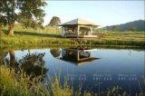 Tente 5X5m de ressource de tente d'hôtel de toit de pagoda